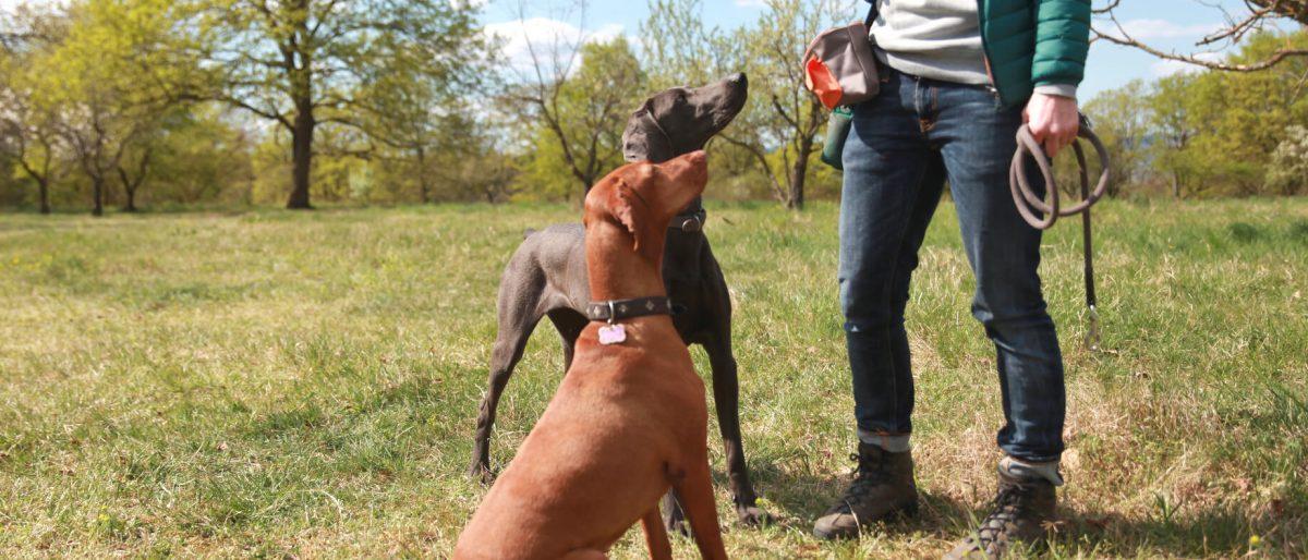 Permalink auf:Jagdhundeerziehung