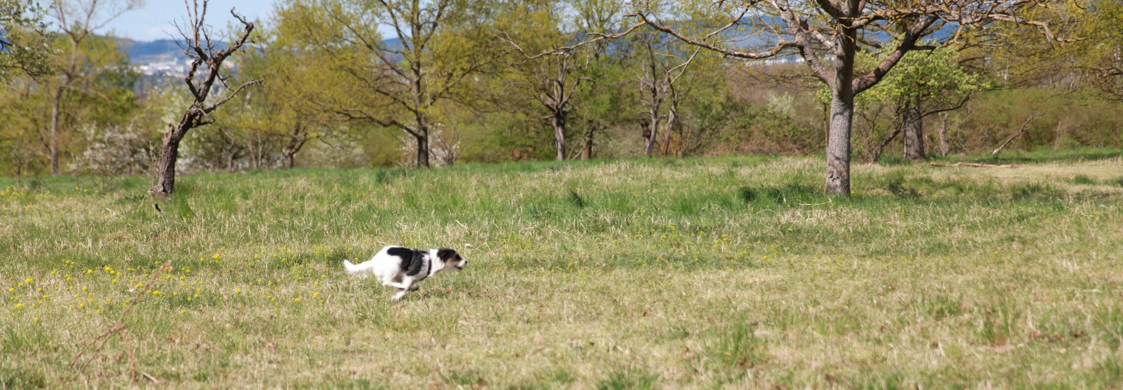 JagdLeidenschaft  ...wie du das Jagen deines Hundes kontrollieren kannst