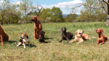 Permalink auf:Dein Familien-Jagd-Hund